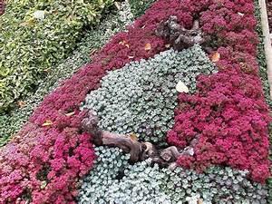 Bodendecker Blühend Winterhart Sonnig : grabgestaltung herbstbepflanzung herbstblumen grab im bild sp tsommerbepflanzung mit einem rot ~ Frokenaadalensverden.com Haus und Dekorationen