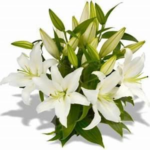 Trauer Blumen Bilder : blumenstrau verzweigte lilien wei von florito flowerpost auf ~ Frokenaadalensverden.com Haus und Dekorationen