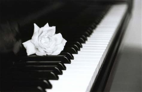La Vie Est Comme Un Piano, Il Y A Le Noir Et Le Blanc. Il