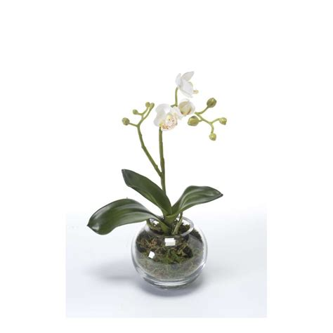 phalaenopsis orchidee artificielle en pot verre 29 cm compositions artificielles