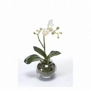 Pot De Fleur Artificielle : orchidee prix ~ Teatrodelosmanantiales.com Idées de Décoration