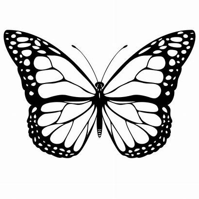 Coloring Pages Butterfly Printable Butterflies Multiple Colour