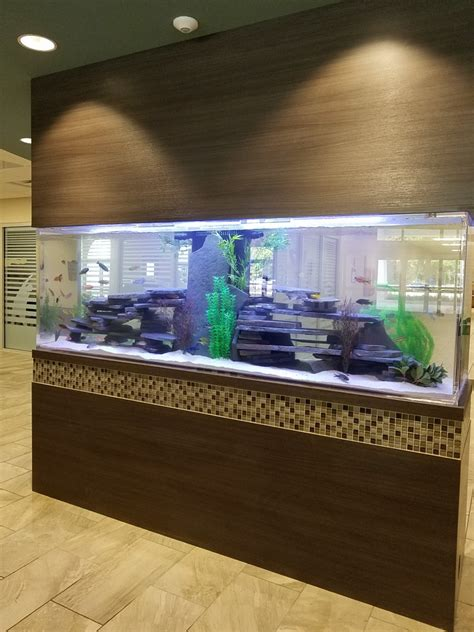 custom aquariums fish tanks zeroedge aquariumscustom