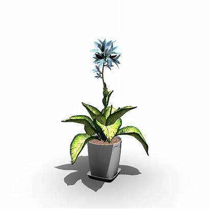 Plant Indoor Plants 3d