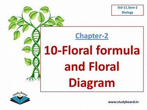 10 Floral Formula And Floral Diagram