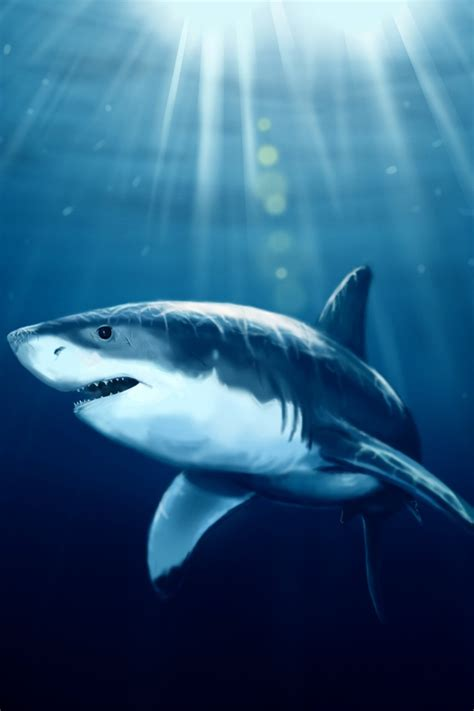 iphone shark wallpapers wallpapersafari