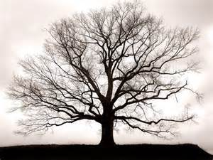Image result for free image of bare tree