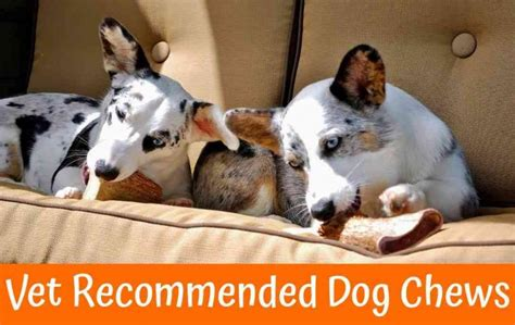 safe vet recommended dog chews guide