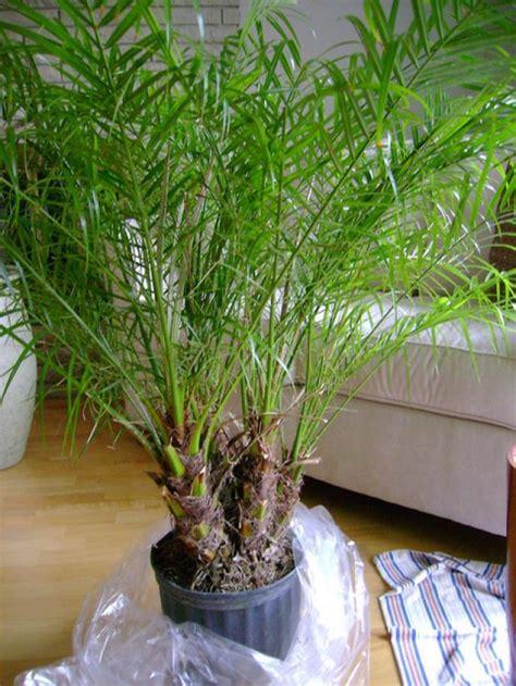 beautiful house plants    purify