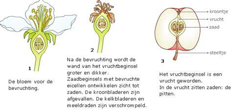 klokhuis insecten vruchten en zaden lesmateriaal wikiwijs