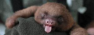 Tired Sloth GIF - Find & Share on GIPHY