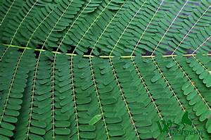 Pinnately Compound Leaf by Edwin Virtudazo - Digital ...