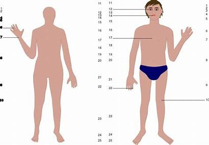 Human Clipart Skin Male Clip Clker Cliparts