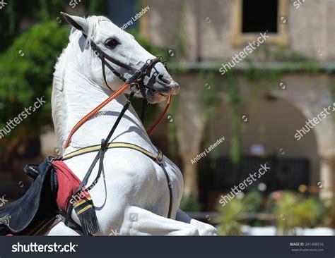 horse andalusian jump shutterstock