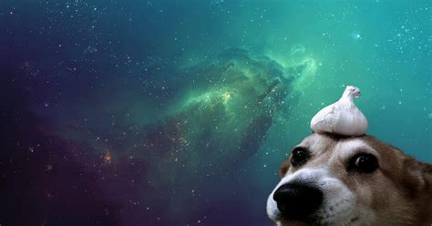 Galaxy Animal Wallpaper - galaxy wallpaper dogs wallpapers and backgrounds