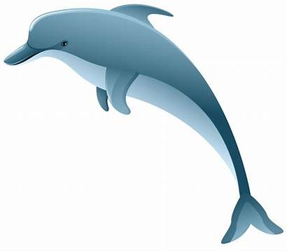 Dolphin Clipart Clip Underwater Transparent Christmas Cliparts