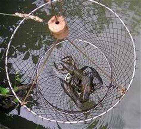 comment cuisiner les ecrevisses comment pecher les ecrevisses d eau douce