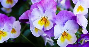 62 Types of Purple Flowers - ProFlowers Blog