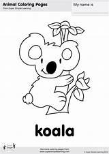 Koala Coloring Pages Simple Bear Super Koalas Animal Worksheets Printable Kindergarten Bears Animals Colouring Sheets Learning Printables Supersimplelearning Activities Things sketch template