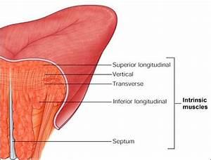 Orofacial Anatomy
