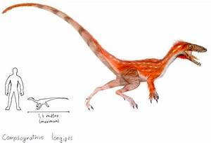 How to draw compsognathus