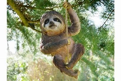 Sloth Climbing Sam Garden Tree Unusual Peeker