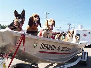 por que los perros son tan importantes en escenarios de desastre