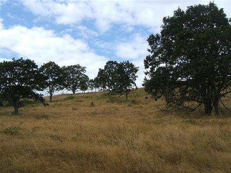 savanna oak ozark highlands of missouri sad state of oak savannas