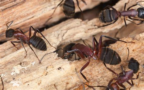 differences  carpenter ant damage  termite