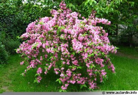 design arbuste persistant en pot 17 asnieres sur seine asnieres sur seine arbuste ylxt info
