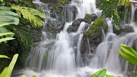 singapore botanic gardens orto botanico punti di interesse a singapore con expedia it