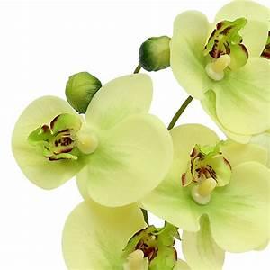 Künstliche Orchideen Im Topf : orchideen im topf gr n h30cm kaufen in schweiz ~ Watch28wear.com Haus und Dekorationen