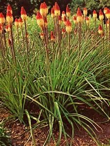 Graminées Vivaces Hautes : fleurs hautes vivaces ~ Premium-room.com Idées de Décoration
