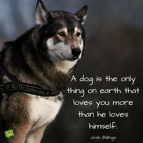 dog quotes  people  love dogs