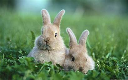 Bunny Wallpapers Wallpapertag