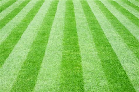 grass lawns sometimes the lawn mows you turfgrass vs low maintenance alternatives the resilient landscape