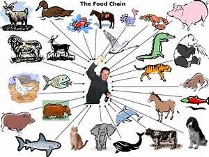 Food chain - Chan4Chan