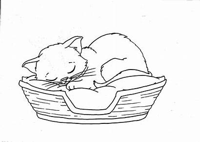 Coloring Kitten Pages Basket Sleeping Cat Cats