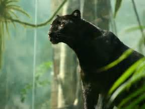 black panther cat black panther desktop wallpaper wallpaperjoe