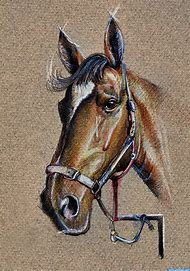 Horse Face Drawing Side View