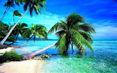 tropical beach wallpapers desktop wallpaper cave