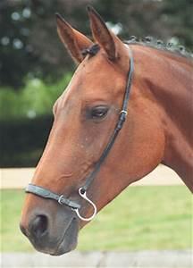 Horse Bit Chart Kineton Noseband Nosebands Bridles Accessories