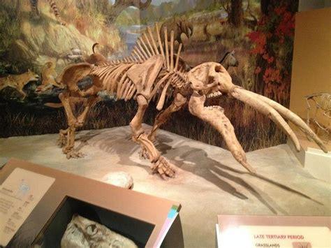 prehistoric elephants  mammoths images