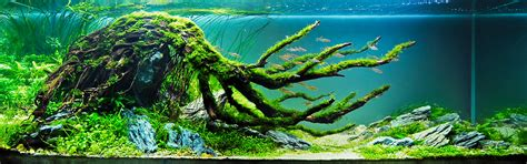 Aquascape  An Introduction  [t A G]