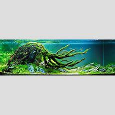 Aquascape  An Introduction  [t A G]