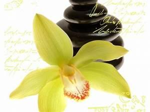 Schöne Orchideen Bilder : orchideen bilder f r wohnraum und wellnessbereich ~ Orissabook.com Haus und Dekorationen