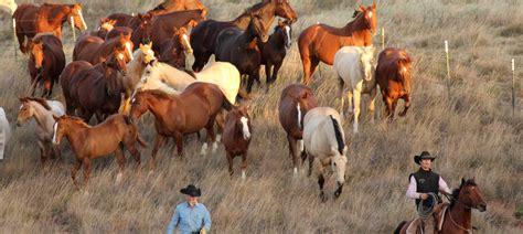 horses ranch matador horse cattle el lodge hunting company