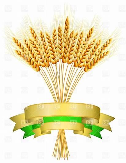 Wheat Harvest Clip Clipart Grain Vector Ribbons