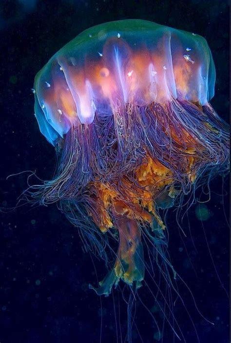 jellyfish eat   brains   types