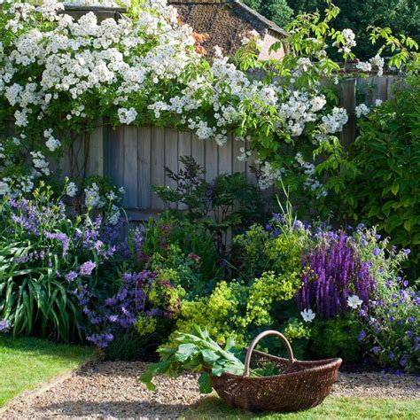 6 Easy Climbing Plants For Your Garden
